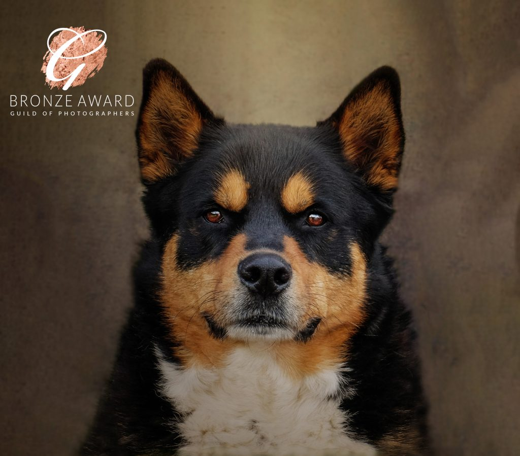 Dog Photographer Cheshire